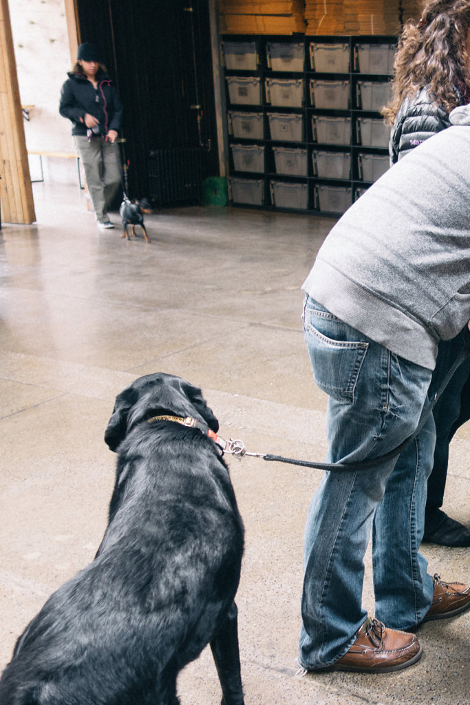 Dogs in sightglass